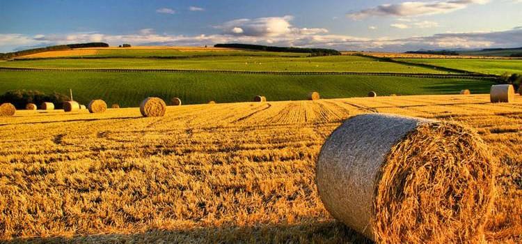 L'agricoltura traina la ripresa dell'occupazione
